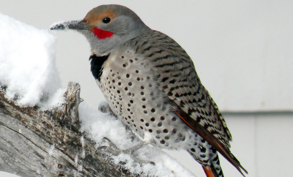 Parks plan Christmas Bird Count